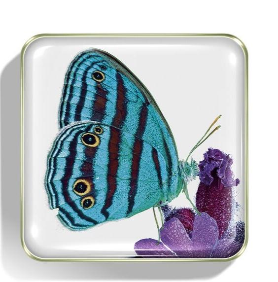 Тени Chantecaille бабочки