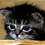 vishnya_26