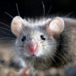 МышкаТоми