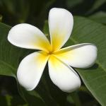 Катибьюти